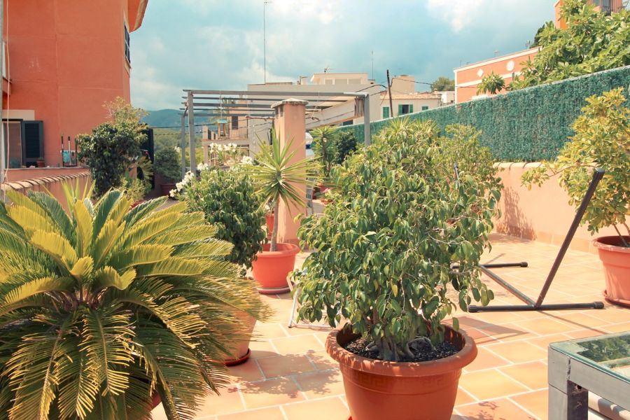 PISO en PALMA DE MALLORCA, zona EL TERRENO. Foto