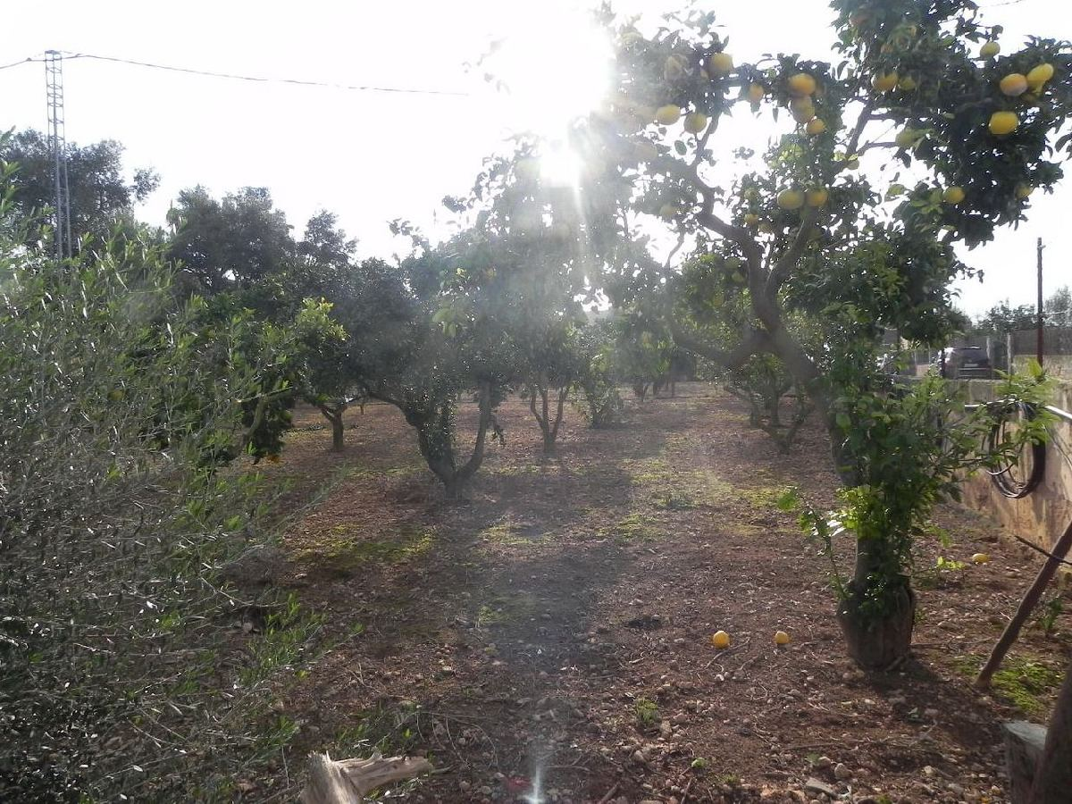Busco terrenos en palma de mallorca en compra venta for Terrenos en mallorca